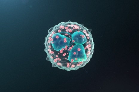 Neutrophil